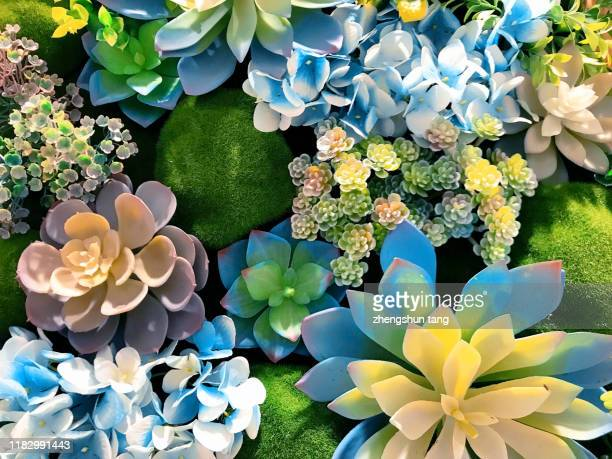 succulent plant background - succulent stock pictures, royalty-free photos & images