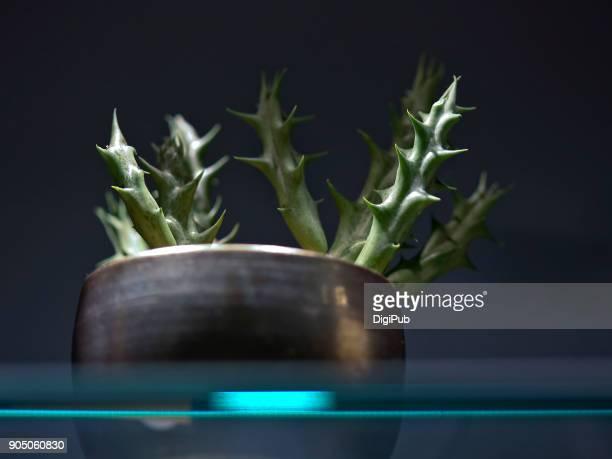 Succulent plant in flower pot