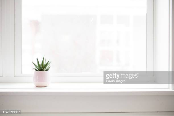 succulent plant on white windowsill in pastel pink vase - window sill stock pictures, royalty-free photos & images