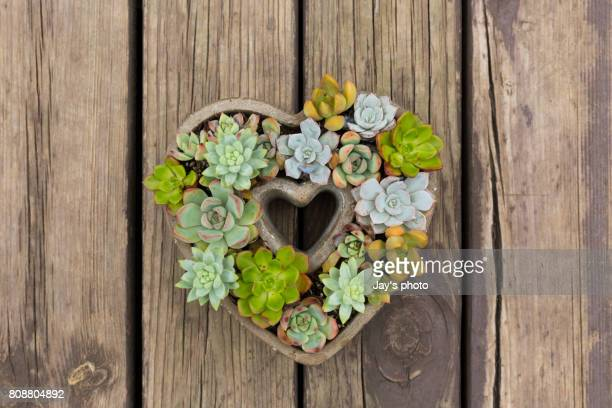 I LOVE YOU Succulent Plants Growing At Garden