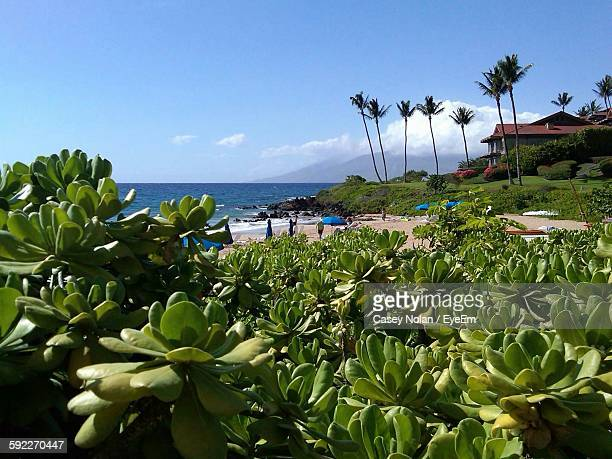 succulent plants growing by sea against sky - casey nolan stock pictures, royalty-free photos & images