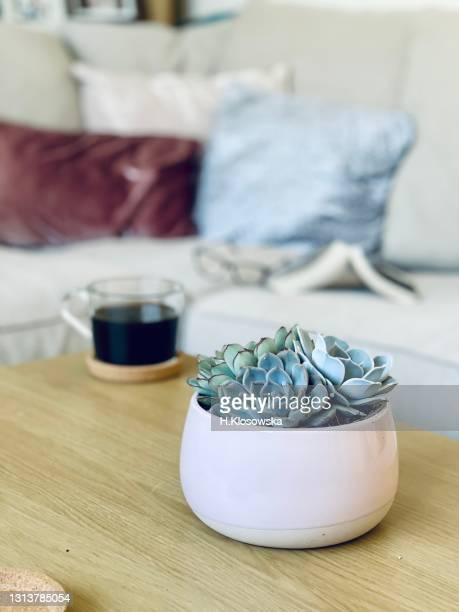 succulent plants in a pink ceramic pot - sofa in a background - refreshment stock pictures, royalty-free photos & images