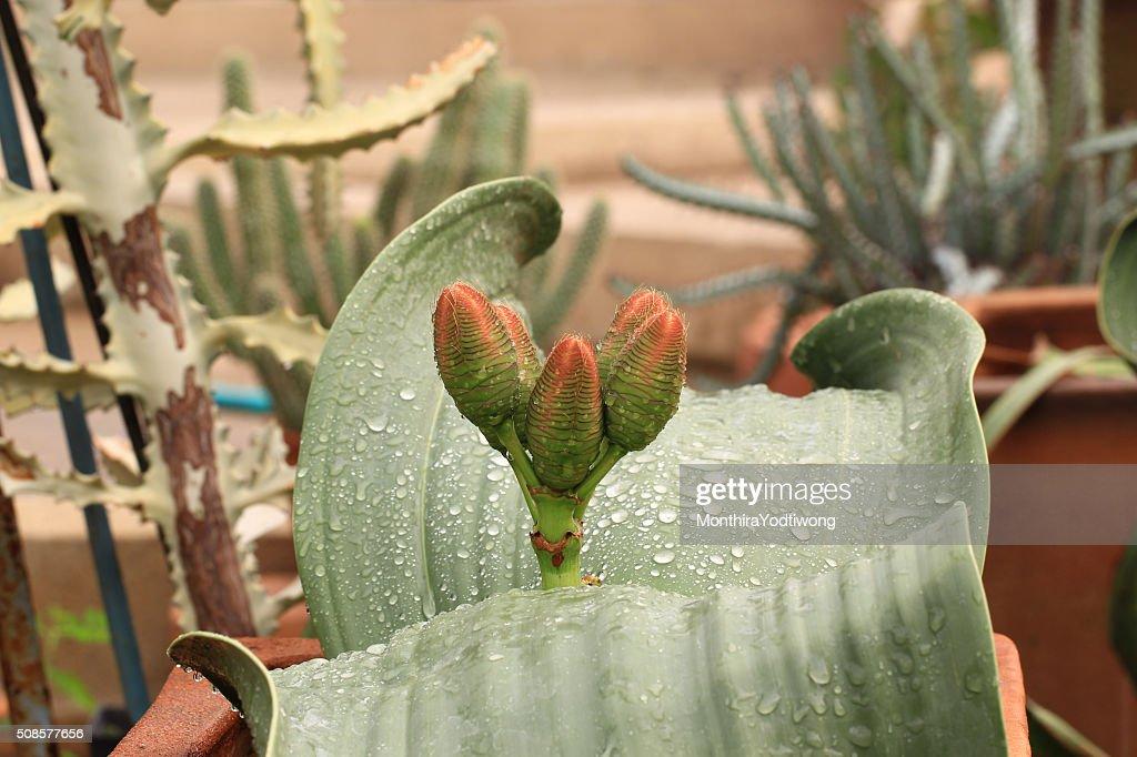 Succulent plants in garden : Bildbanksbilder