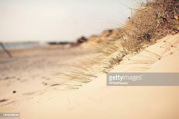 Plantes succulentes dans le sable