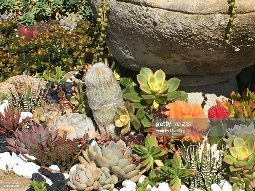 A Succulent Rock Garden : Stock Photo