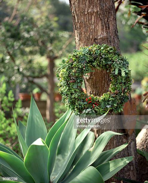 Succulent wreath and agave plant