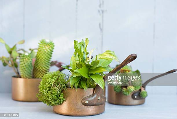 Succulents, cacti and spathiphyllum planted in metal pots