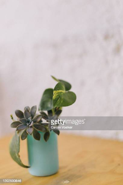 succulents growing out of a turquoise email cup - シンプルな暮らし ストックフォトと画像
