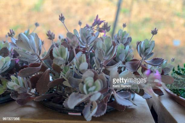 succulents have this name because they retain much liquid. These plants are typical of the African continent and are great for those who do not have much time or talent to take care of plants! Many people confuse the succulents with the cacti, but these h