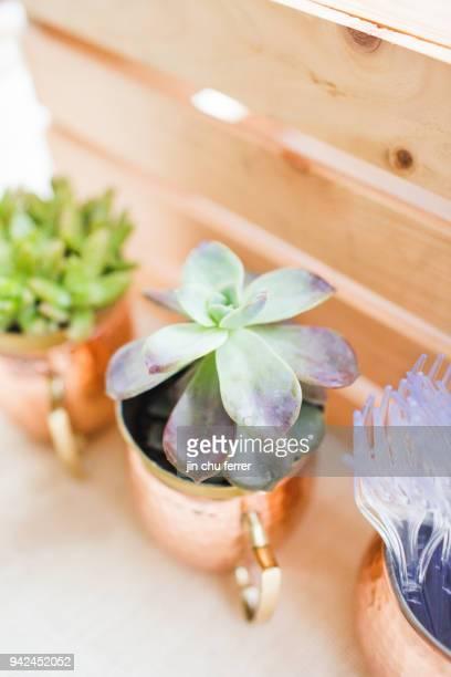 Succulents in Copper Mugs.
