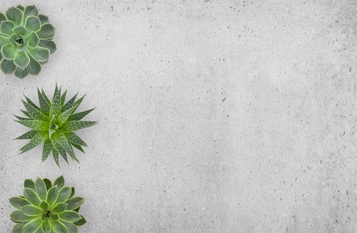 Succulents Plants on Concrete Background 1136020000