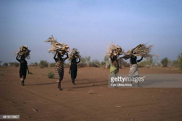 Sudan Work Women in desert area carrying bundles of firewood on their heads