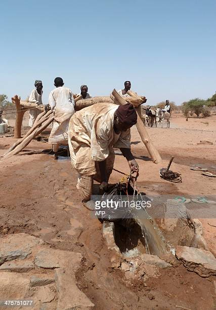 A Sudanese man pours water into a tough for collection after it was pulled out a of a deep well on February 28 2014 near the temple ruins from the...