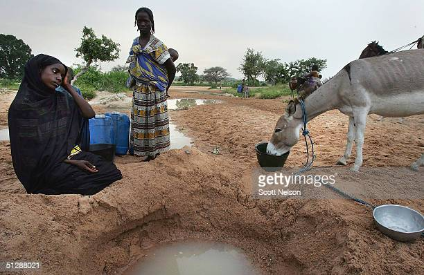 Sudanese refugees from the violence plagued Darfur region collect water in a creek bed in neighboring Chad after crossing the border September 9 2004...
