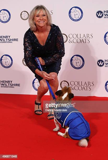 Sue Barker attends Battersea Dogs Cats Home Collar And Coats Ball on November 12 2015 in London England