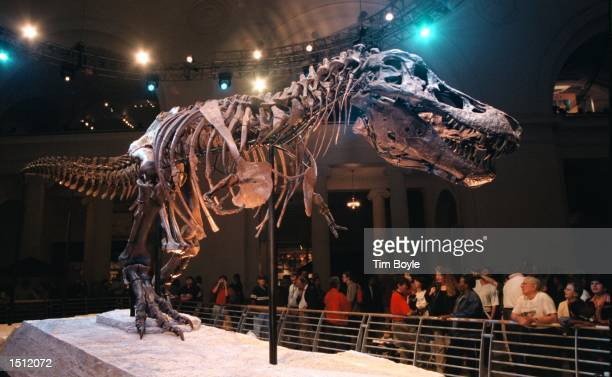 Sue, the largest and most complete Tyrannosaurus rex ever found, is shown on display May 17, 2000 at the Field Museum in Chicago. The fossil was...