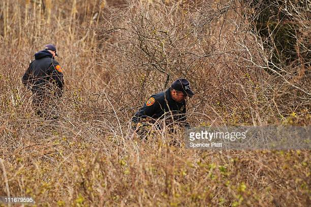 Suffolk County Police search through brush along a stretch of beach highway where they recently found human remains on April 5 2011 in Babylon New...