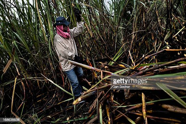 A sugar cane cutter works on a plantation near Florida on 25 May 2012 in Florida Valle del Cauca Colombia The Cauca River valley is the booming...
