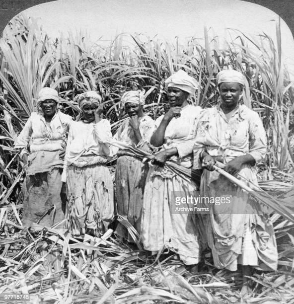 Sugar cane field hands Montego Jamaica