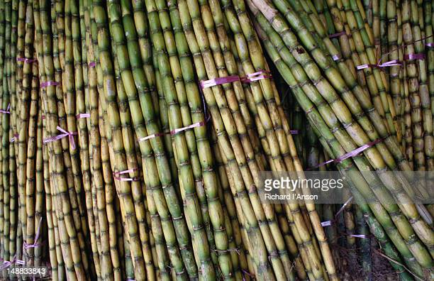 Sugar cane for sale, Little India.