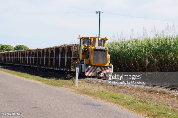 sugar cane harvest - townsville queensland stock pictures, royalty-free photos & images