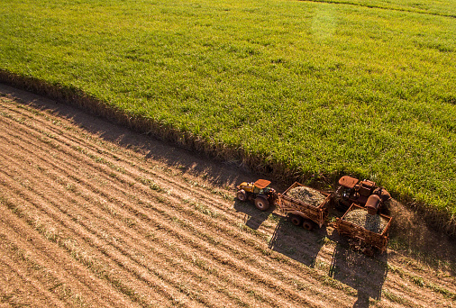 Sugar cane hasvest plantation aerial 955191688