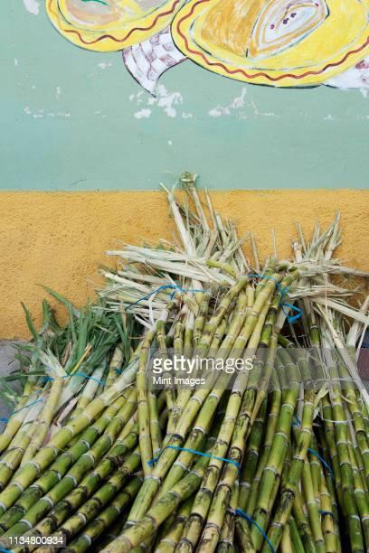sugar cane - サトウキビ ストックフォトと画像