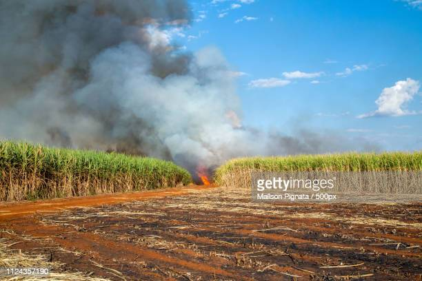 sugar cane plantation and fire - son la stock pictures, royalty-free photos & images
