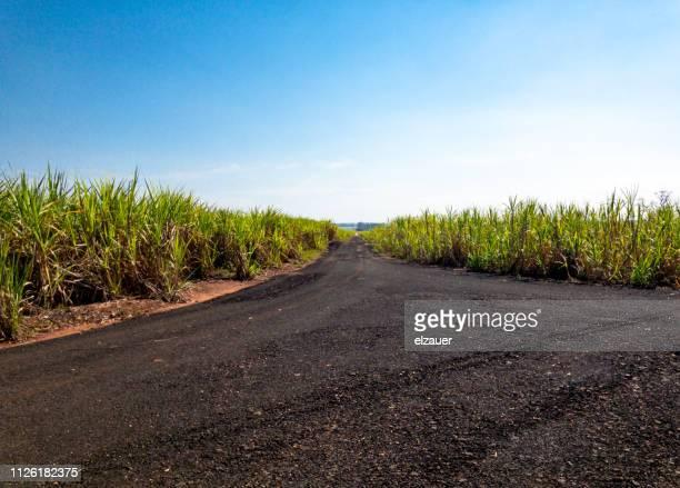 sugar cane plantation - 南アメリカ ストックフォトと画像
