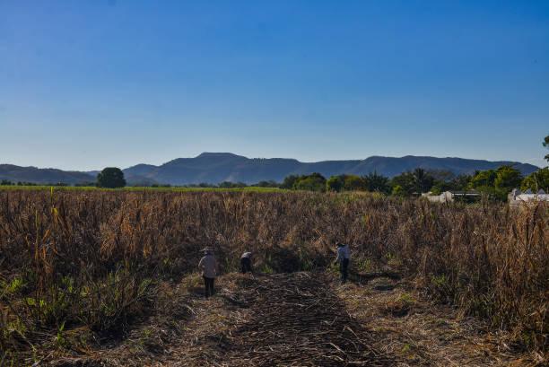SLV: Environmentalist Organizations Protest Against Sugar Cane Growers in El Salvador