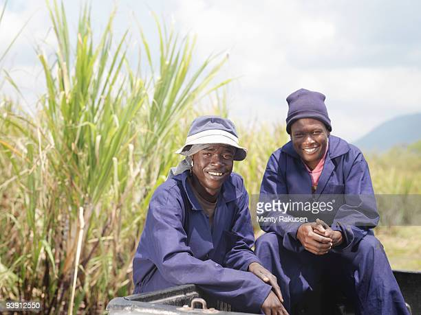 Sugar Cane Workers In Pickup Truck