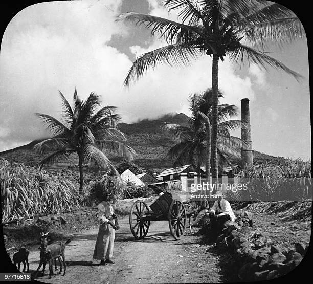 Sugar estate on the island if Nevis British West Indies near the boyhood home of Alexander Hamilton