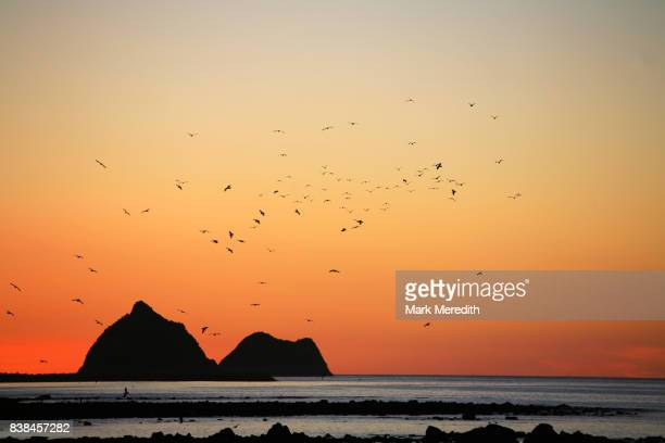 Sugar Loaf Marine Reserve in New Plymouth