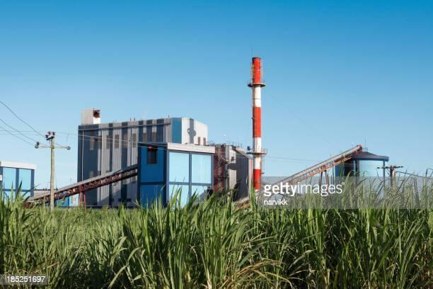 Sugar mill y sugarcane Campo
