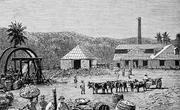 Sugar mills on a sugar cane plantation at St Thomas,...