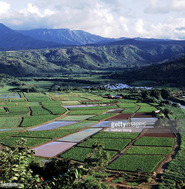 CONTENT] Sugar plantation on the island of Kauai