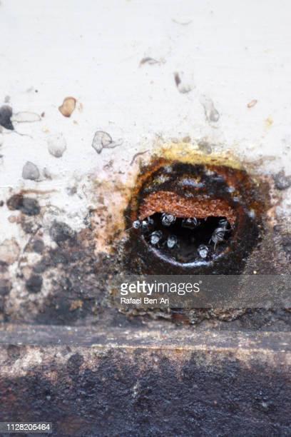 sugarbag bees beehive - rafael ben ari stock-fotos und bilder