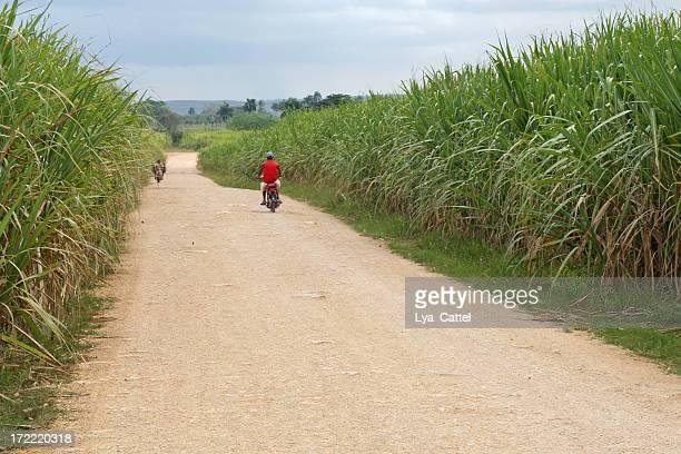 Sugarcane Campo