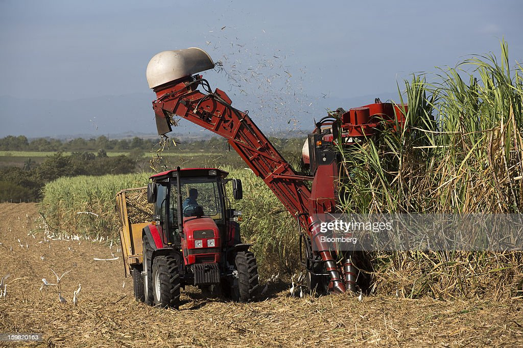 A sugarcane harvesting machine drops freshly cut cane into a tractor-pulled trailer during a harvest in a field near Jatibonico, Cuba, on Sunday, Jan. 13, 2013. Sugar prices fell 16 percent last year as global supplies are forecast to outpace demand for a third year in 2012-13, according to the London-based International Sugar Organization. Photographer: Andrey Rudakov/Bloomberg via Getty Images