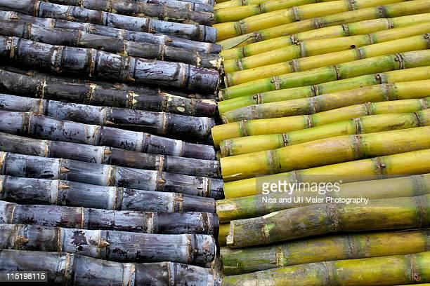 Sugarcane in Cambodia