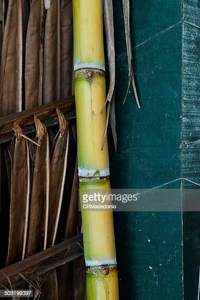 sugarcane - crmacedonio fotografías e imágenes de stock