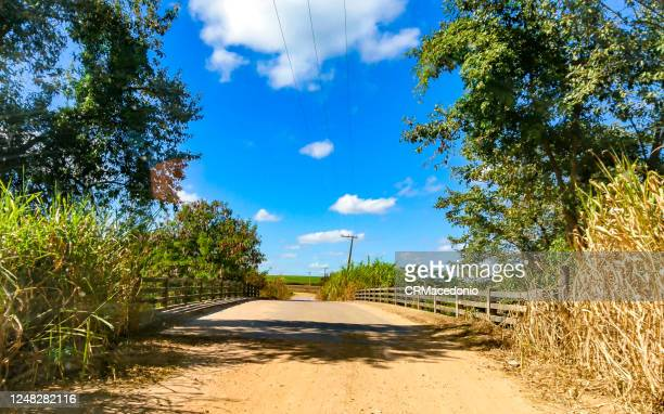 sugarcane plantations are crossed by bridges, roads and highways in the rural area of piracicaba. - crmacedonio - fotografias e filmes do acervo