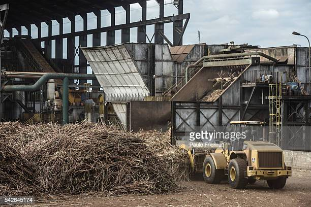 Sugarcane stalks are placed in a machine to wash before its crashed At Unidade industrial Cruz Alta da Guarani SA ethanol sugar and energy , about 40...