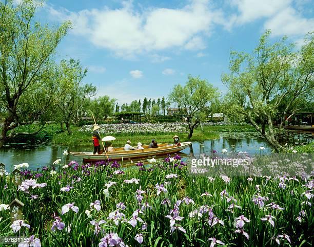 suigou sawara municipal aquatic botanical garden, katori, chiba, japan - 千葉県 ストックフォトと画像