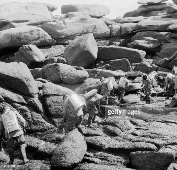 Suite au naufrage du pétrolier lybien 'Torrey Canyon' des militaires équipés de masques et de pulvérisateurs nettoient les rochers pollués sur la...