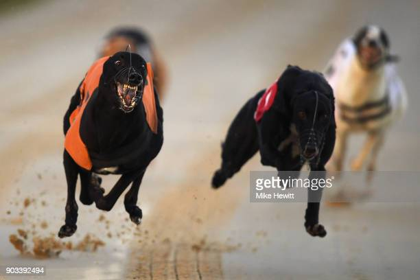 Suki Mart wins the fifth race at the Coral Brighton and Hove Greyhound Stadium on January 10 2018 in Brighton England