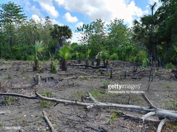 sulawesi deforestation - palm oil stock pictures, royalty-free photos & images