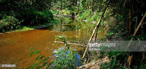 sulawesi, natural landscape near rantepao - rantepao stock photos and pictures