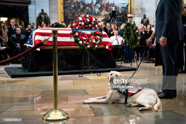 Sully a yellow Labrador service dog for former President George H W Bush sits near the casket of the late former President George HW Bush as he lies...