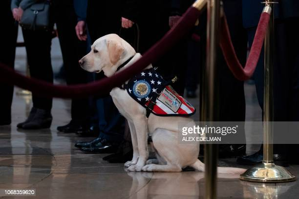 Sully the service dog is seen as people pay respects as the remains of former US President George H W Bush lie in state in the US Capitol's rotunda...